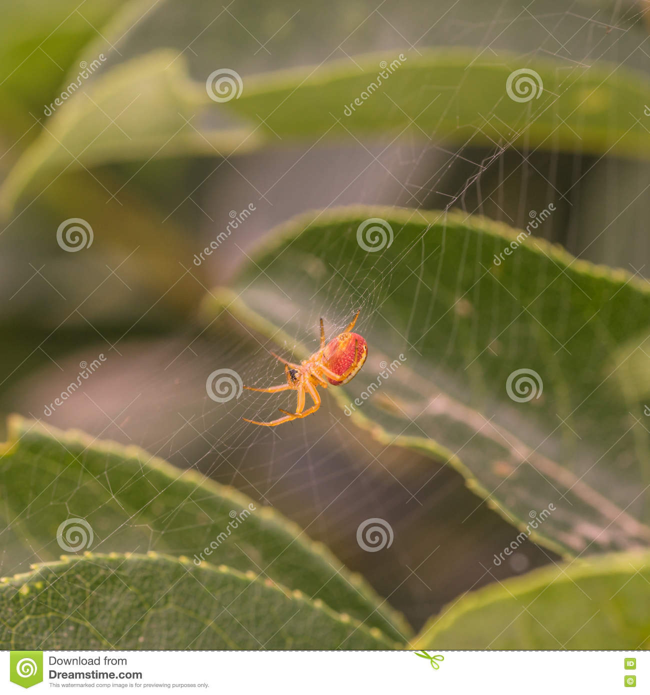 Side View of a Spider in Web