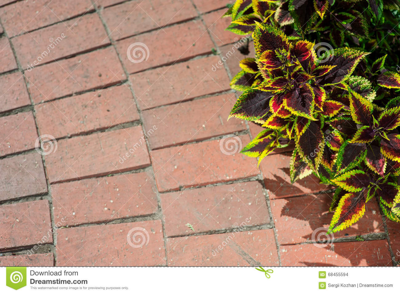 Download Sidewalk In The Garden Begonia Stock Photo - Image of footpath, park: 68455594