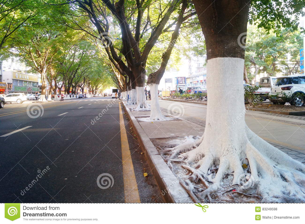 Sidewalk tree roots were painted white lime, safe over winter