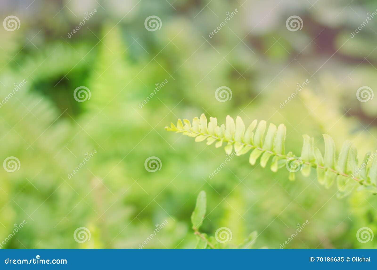 Sidor av den gröna ormbunken