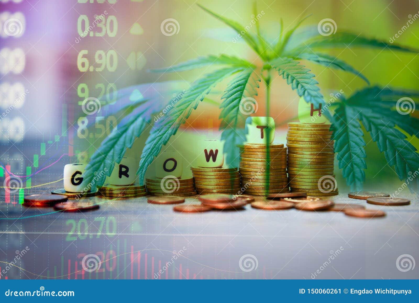 Sidor för cannabisaffärsmarijuana och bunt av marknadspriset för myntmaterielframgång upp pengar för handel för graf för vinsttil