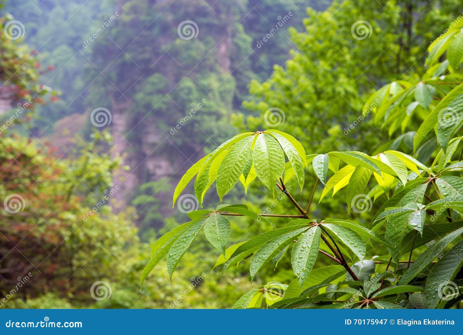 Sidor med droppe av regnvatten i skogbakgrund