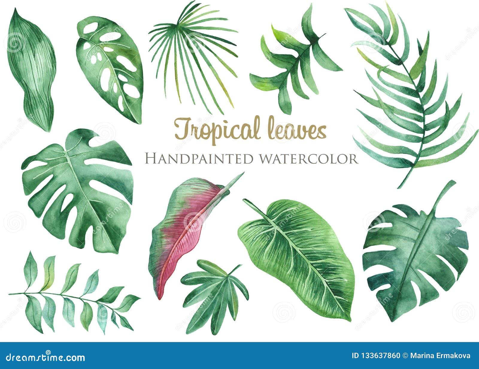 Sidor och blommor för vattenfärg tropiska