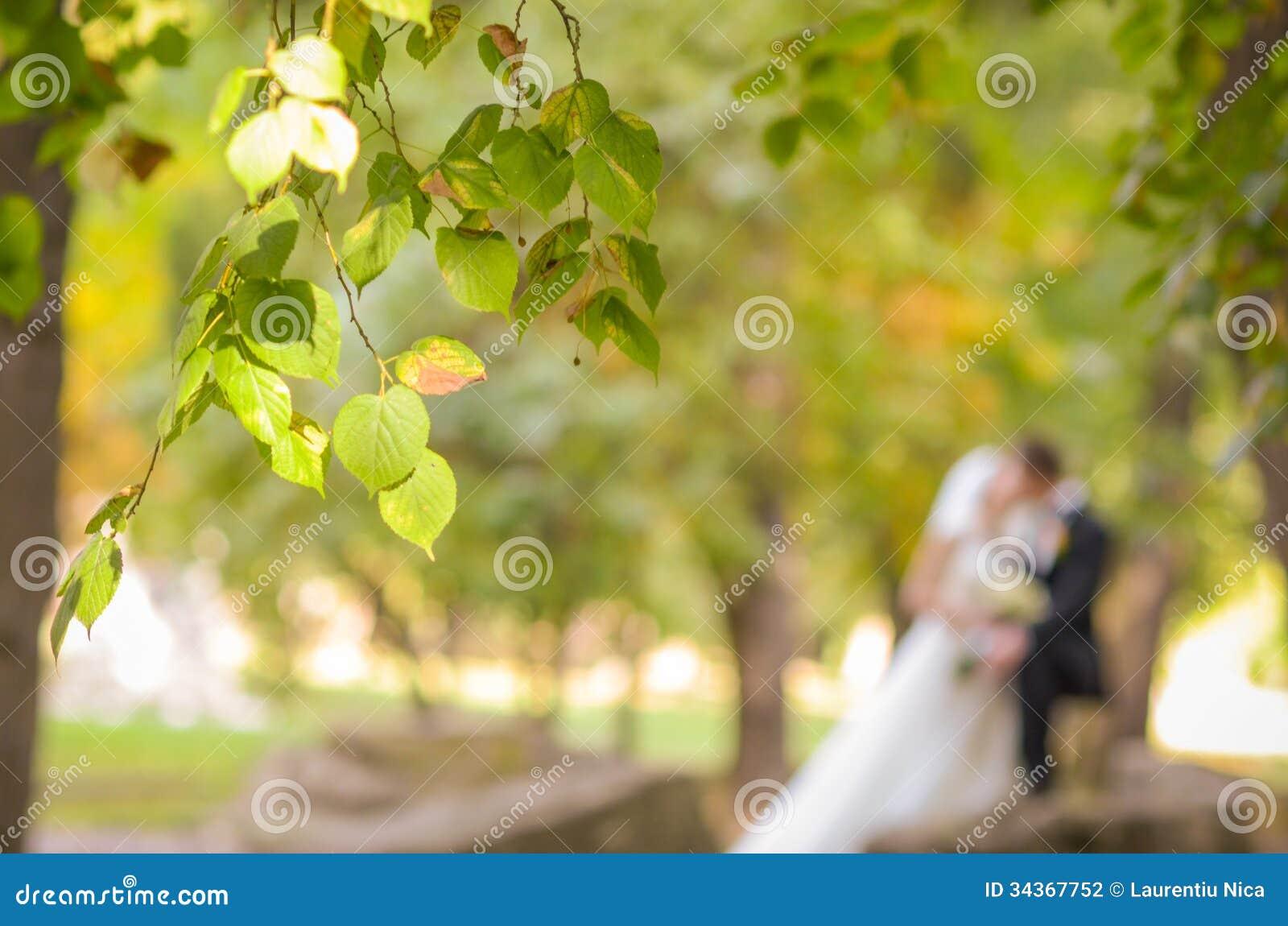 Sidor på träden