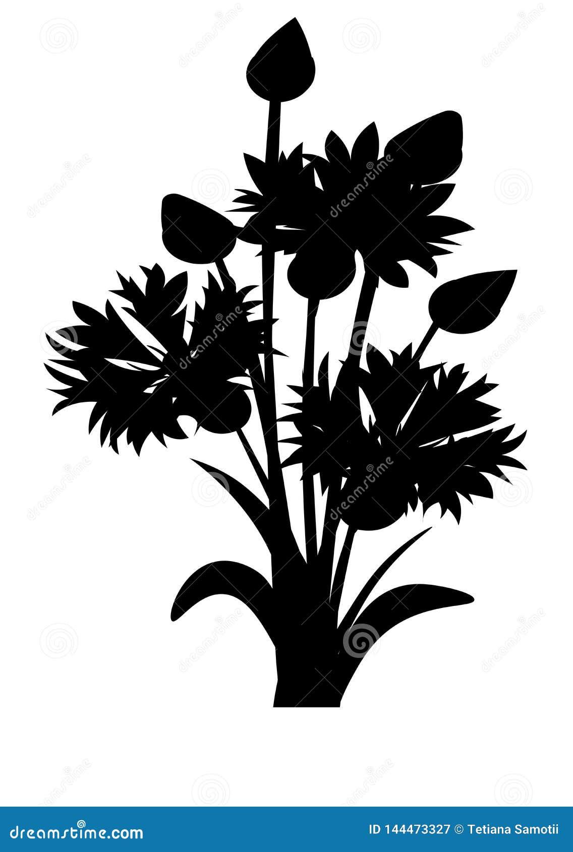 Sieć Cornflowers nakreślenie Nieociosany bukieta projekt Medyczni ziele ustawiający również zwrócić corel ilustracji wektora