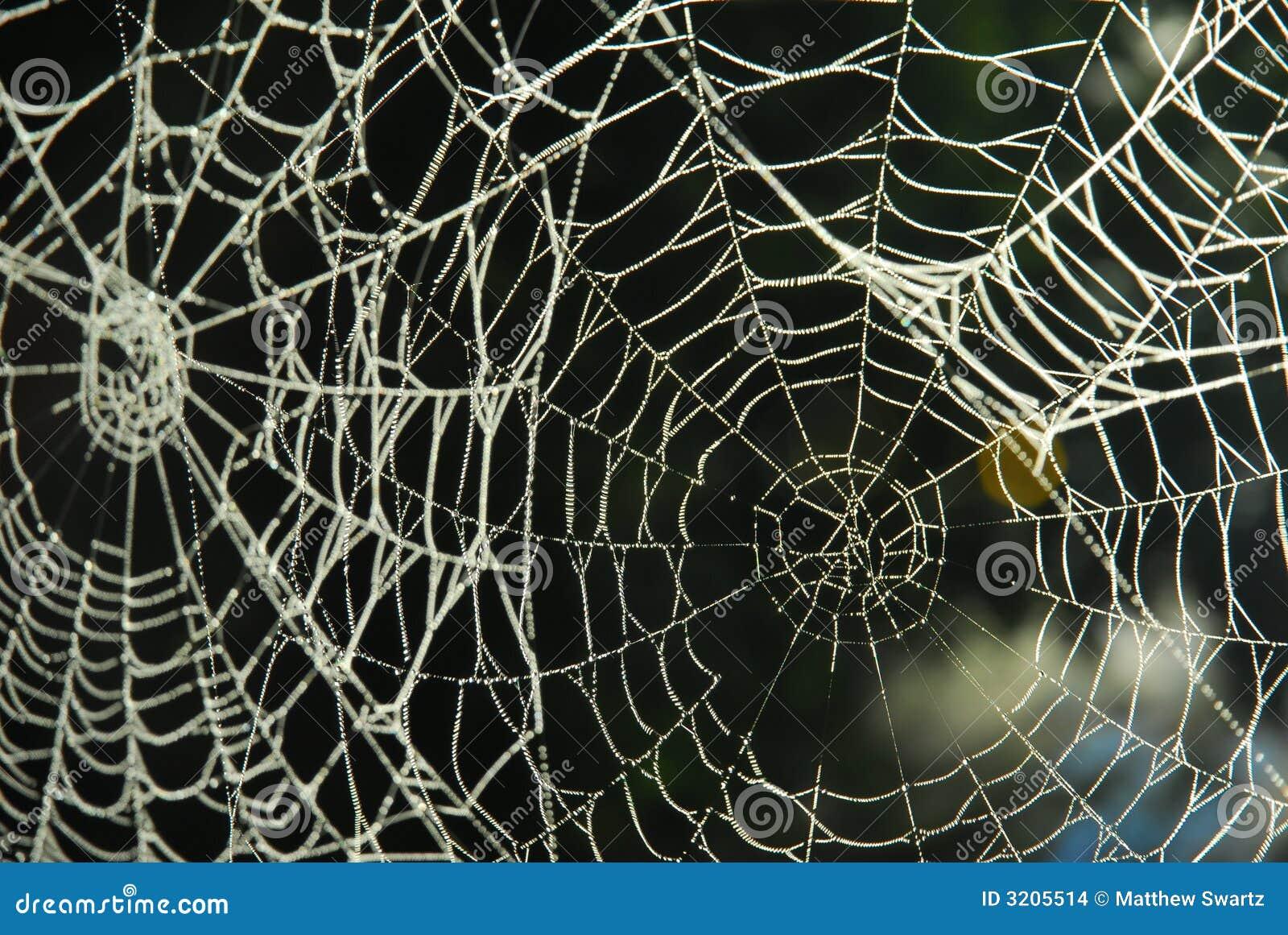 Sieć pająka rosa