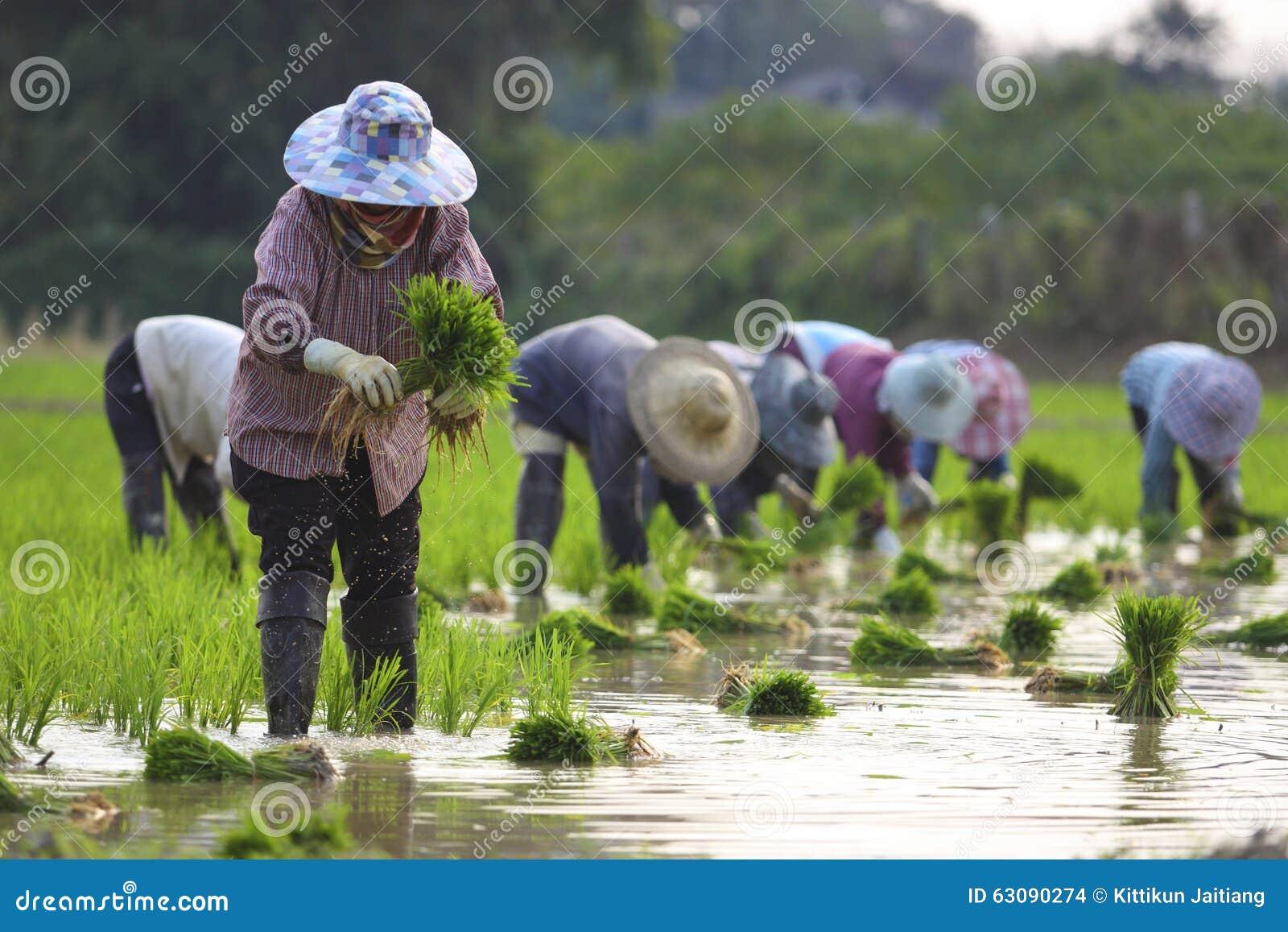Sieben Landwirte
