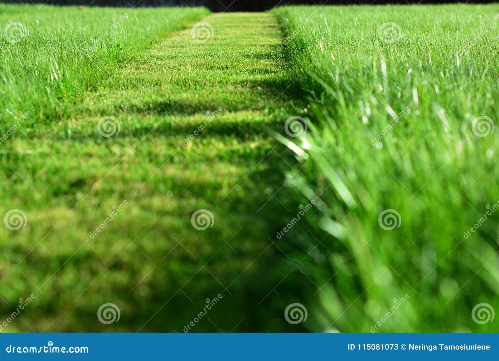 Siega del césped Una perspectiva de la tira del corte de la hierba verde