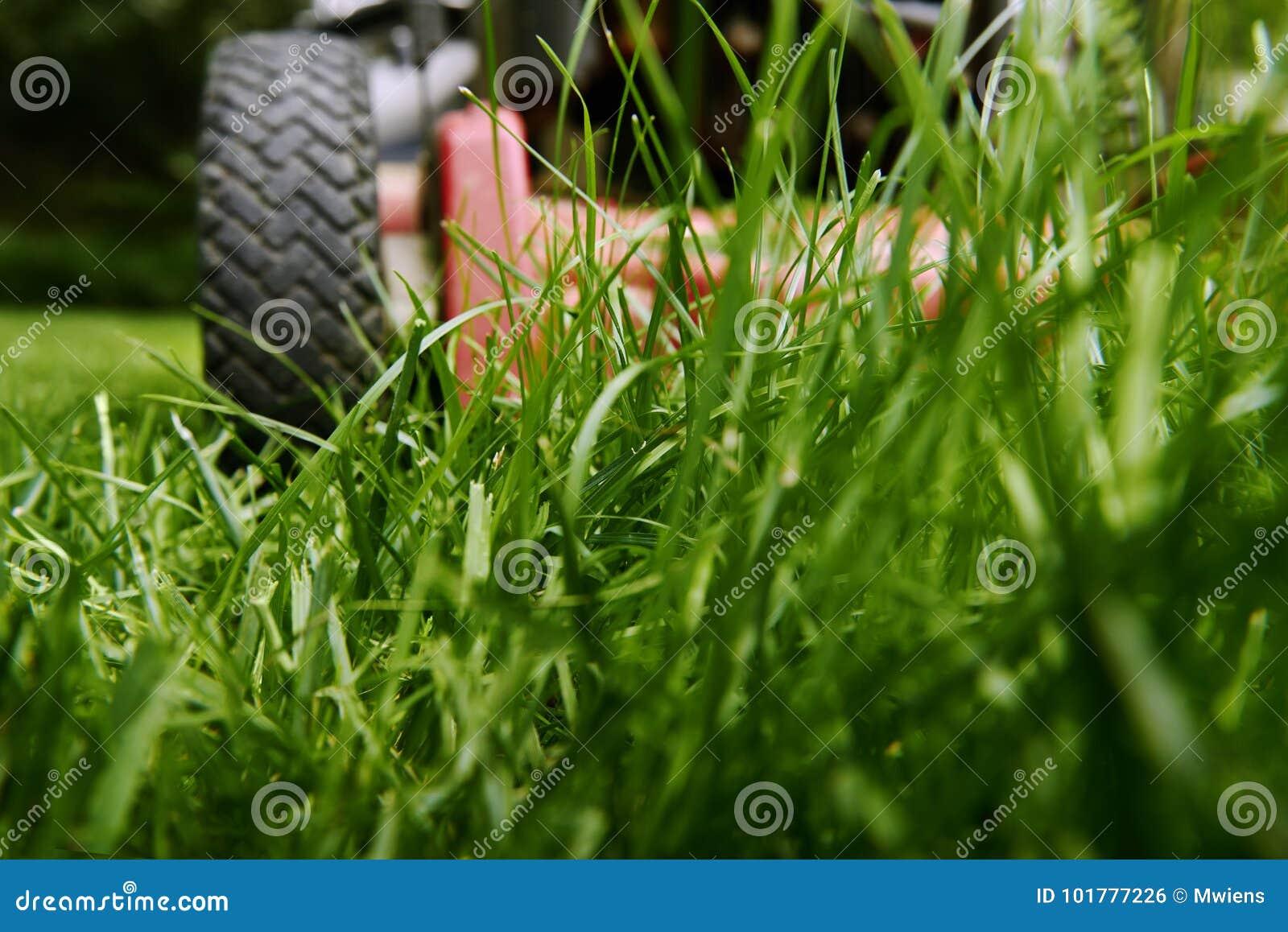 Siegue el ángulo bajo del césped de la hierba del corte del cortacésped
