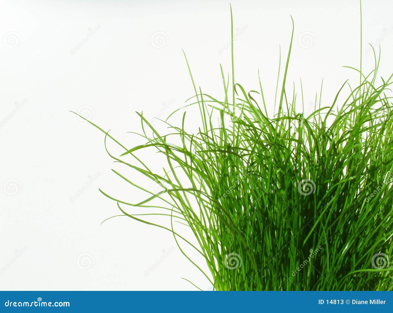 Siempre más verde