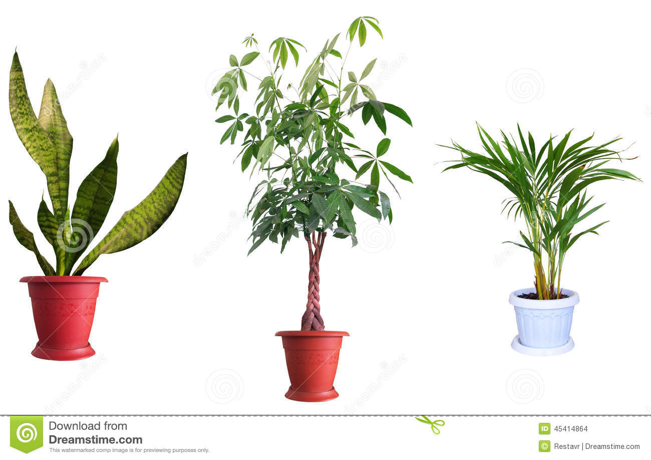 Sierplanten stock foto afbeelding 45414864 for Plantas ornamentales