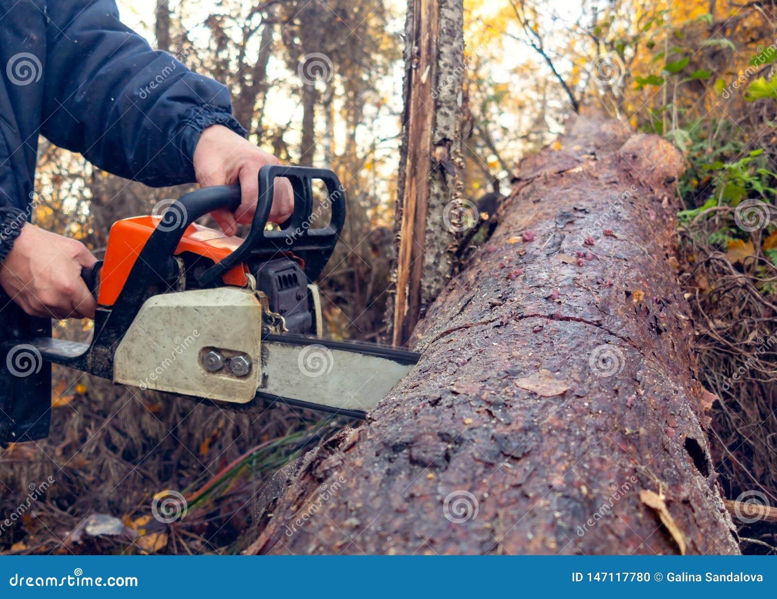 Sierras del hombre una clave gruesa de la motosierra el bosque