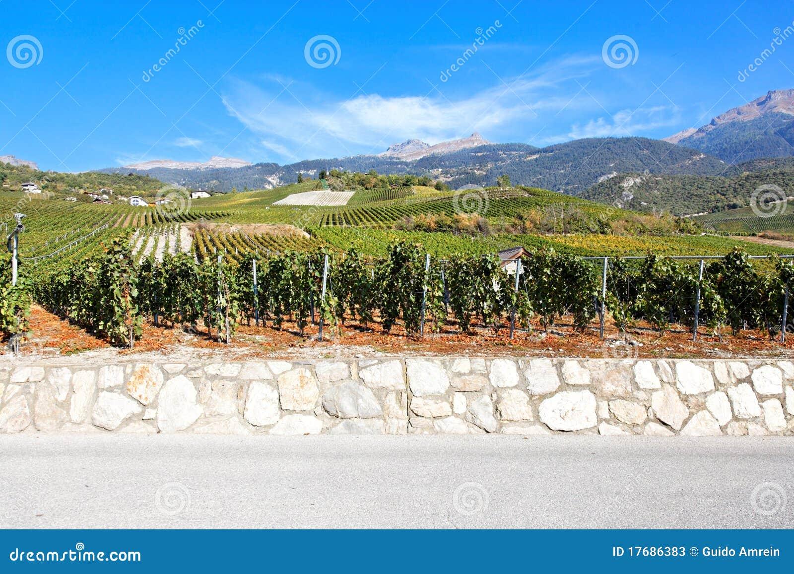 Sierre Switzerland Valais winnica