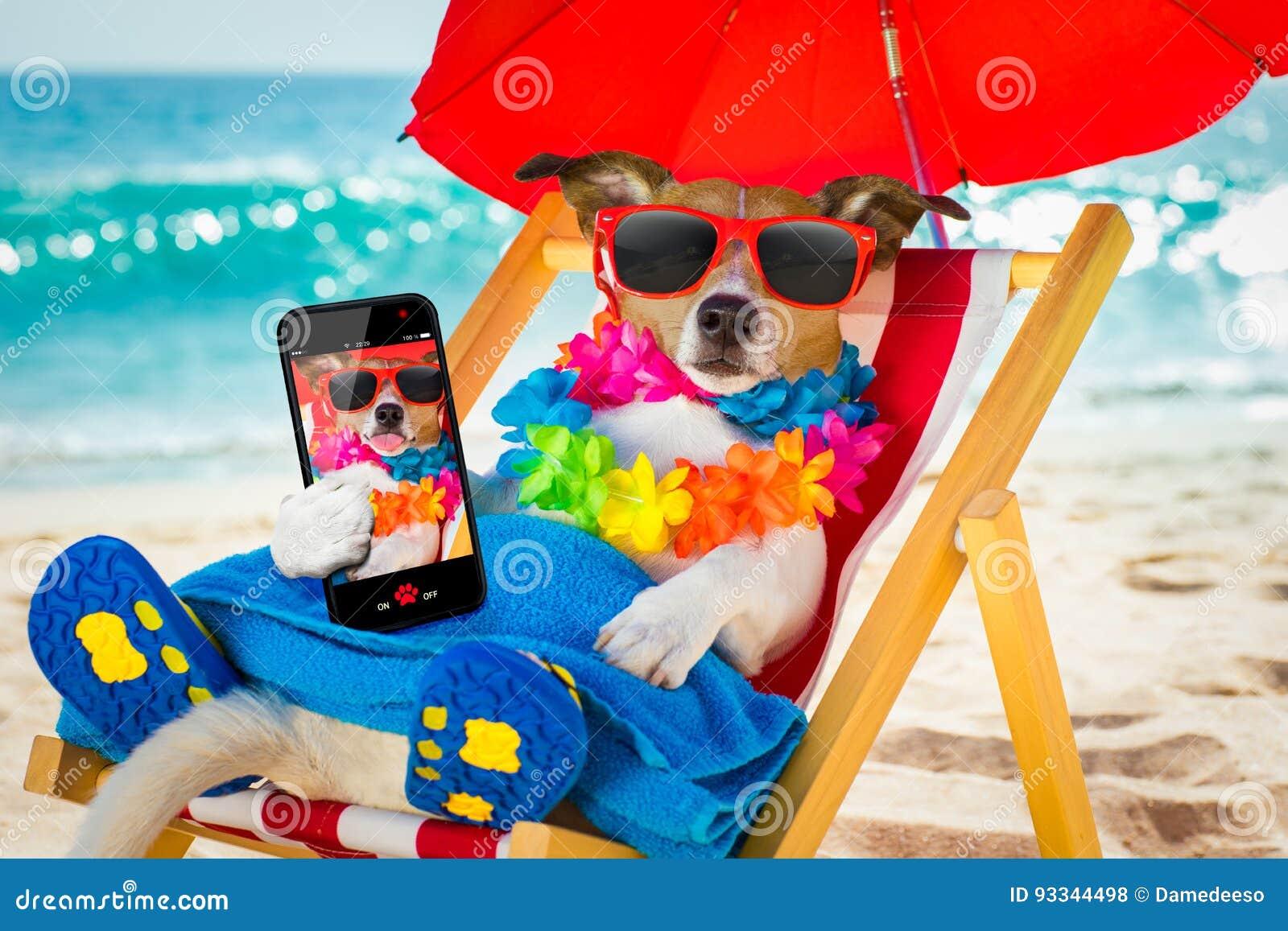Siesta del cane sulla sedia di spiaggia