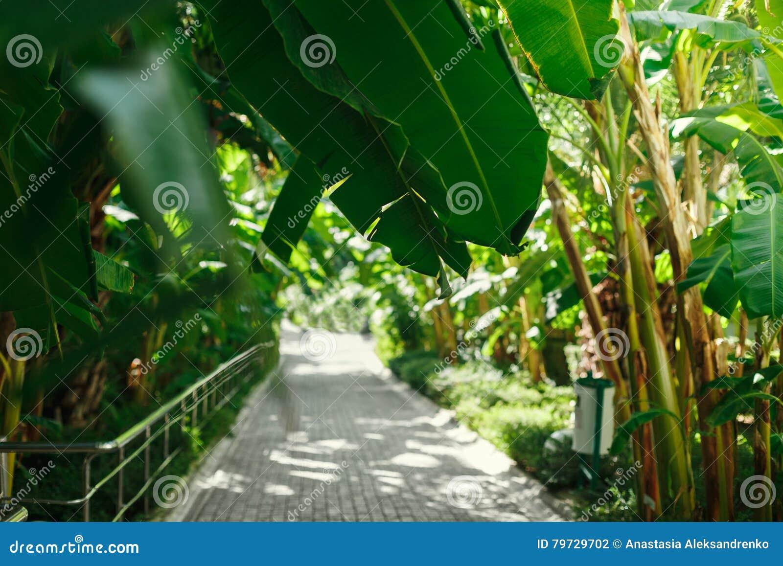 Siga la desaparición en la distancia debajo de las palmeras