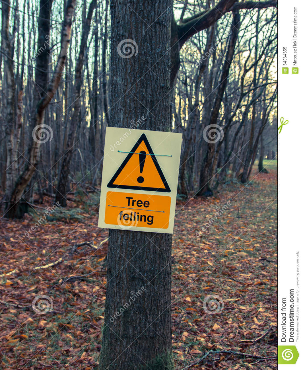 trees in danger Why are rainforests being destroyed  drought causes die-offs of trees and dries out leaf litter, increasing the risk of forest fires, which are often set by land.