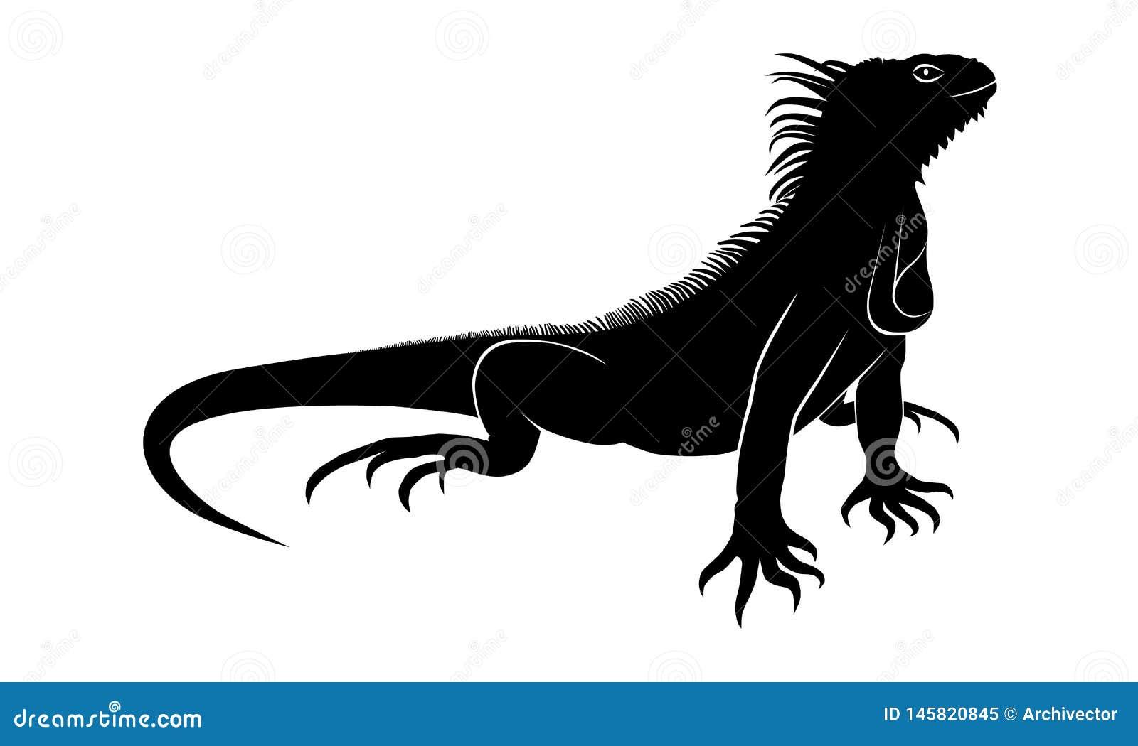 Signe de noir d iguane