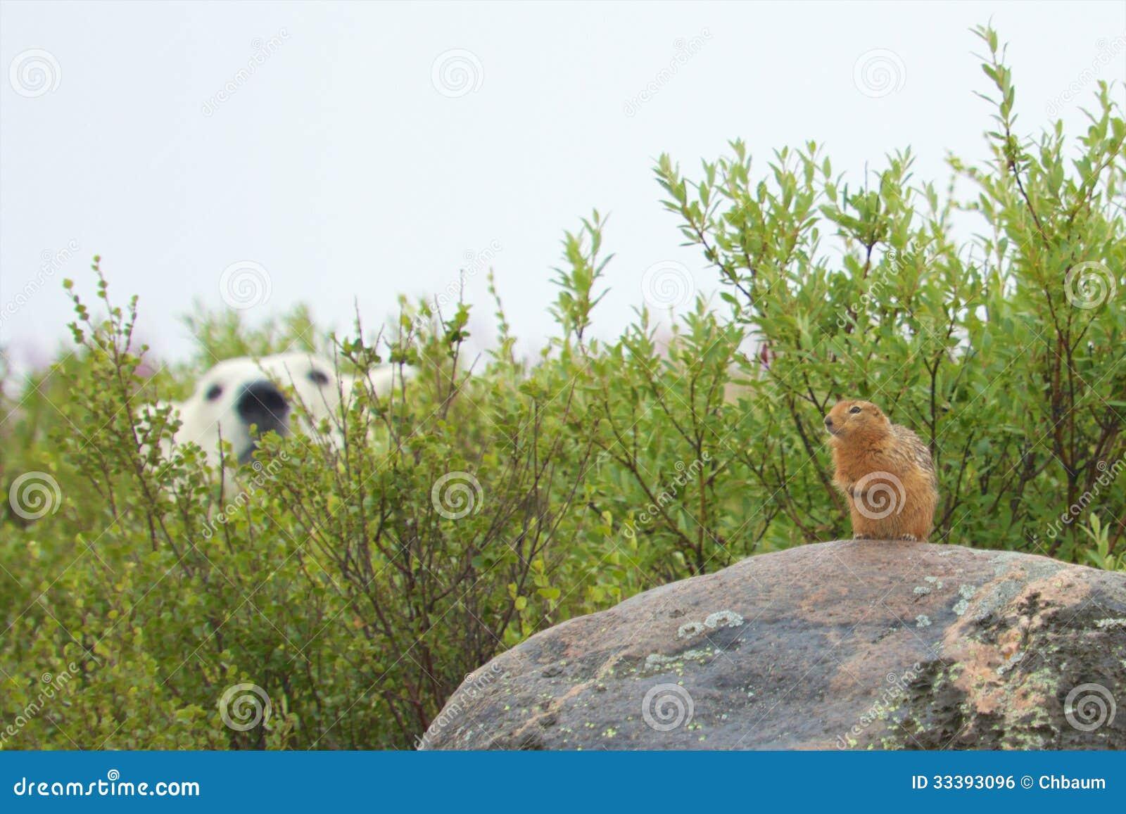 Sik Sik et ours blanc affamé