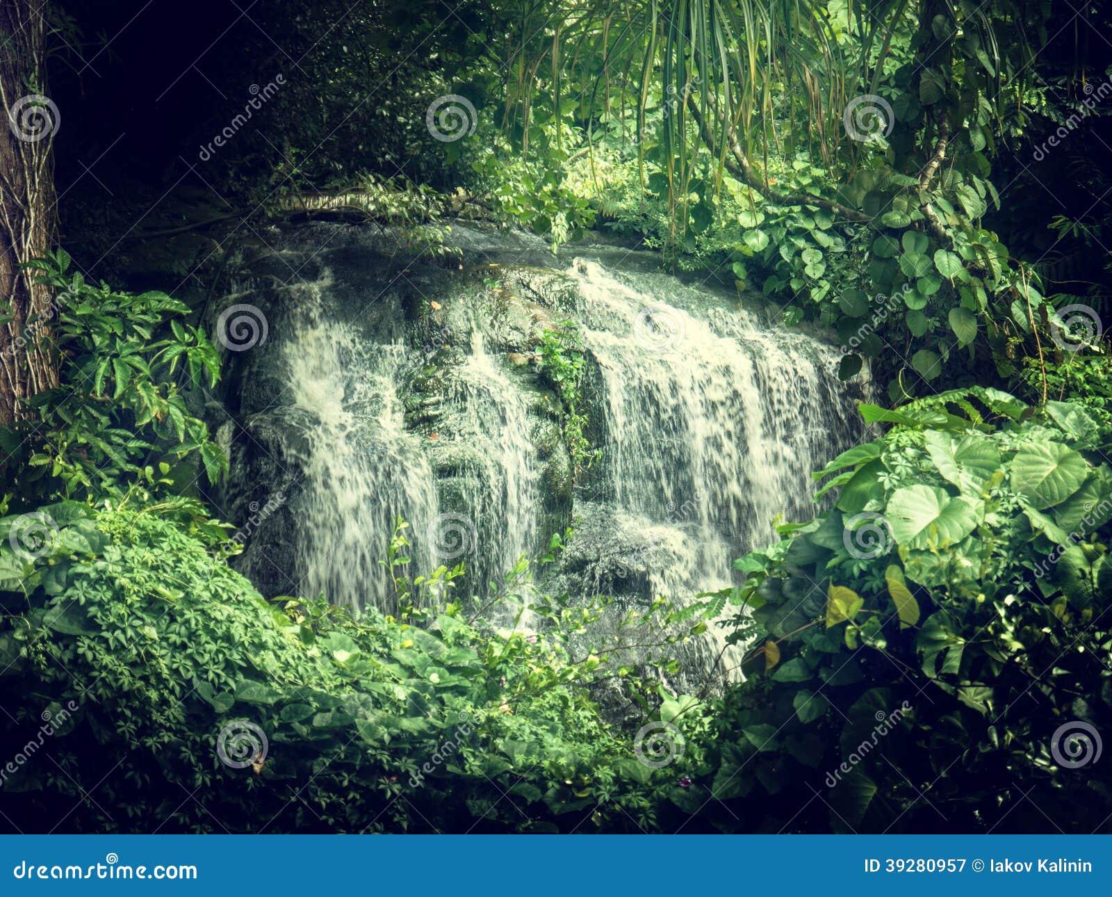 Siklawa w dżunglach Seychelles
