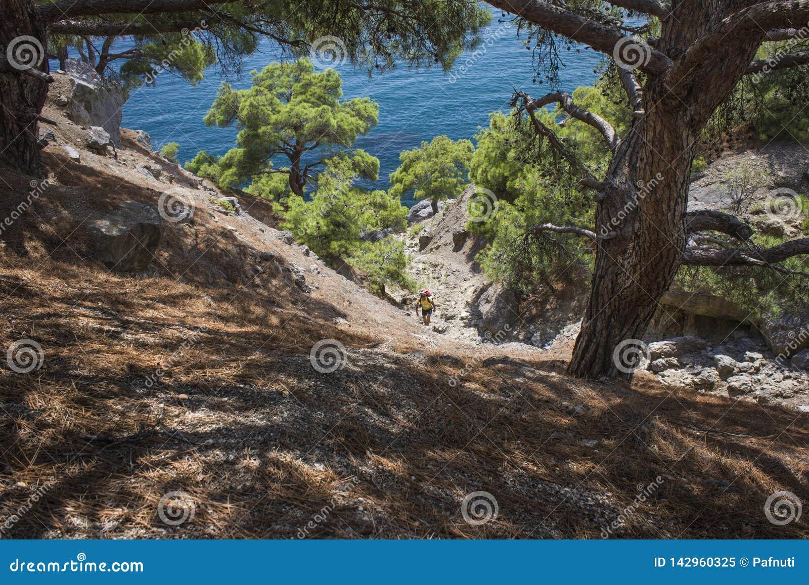 Sikt av den branta pinjeskogen som förbiser havet på en varm sommardag