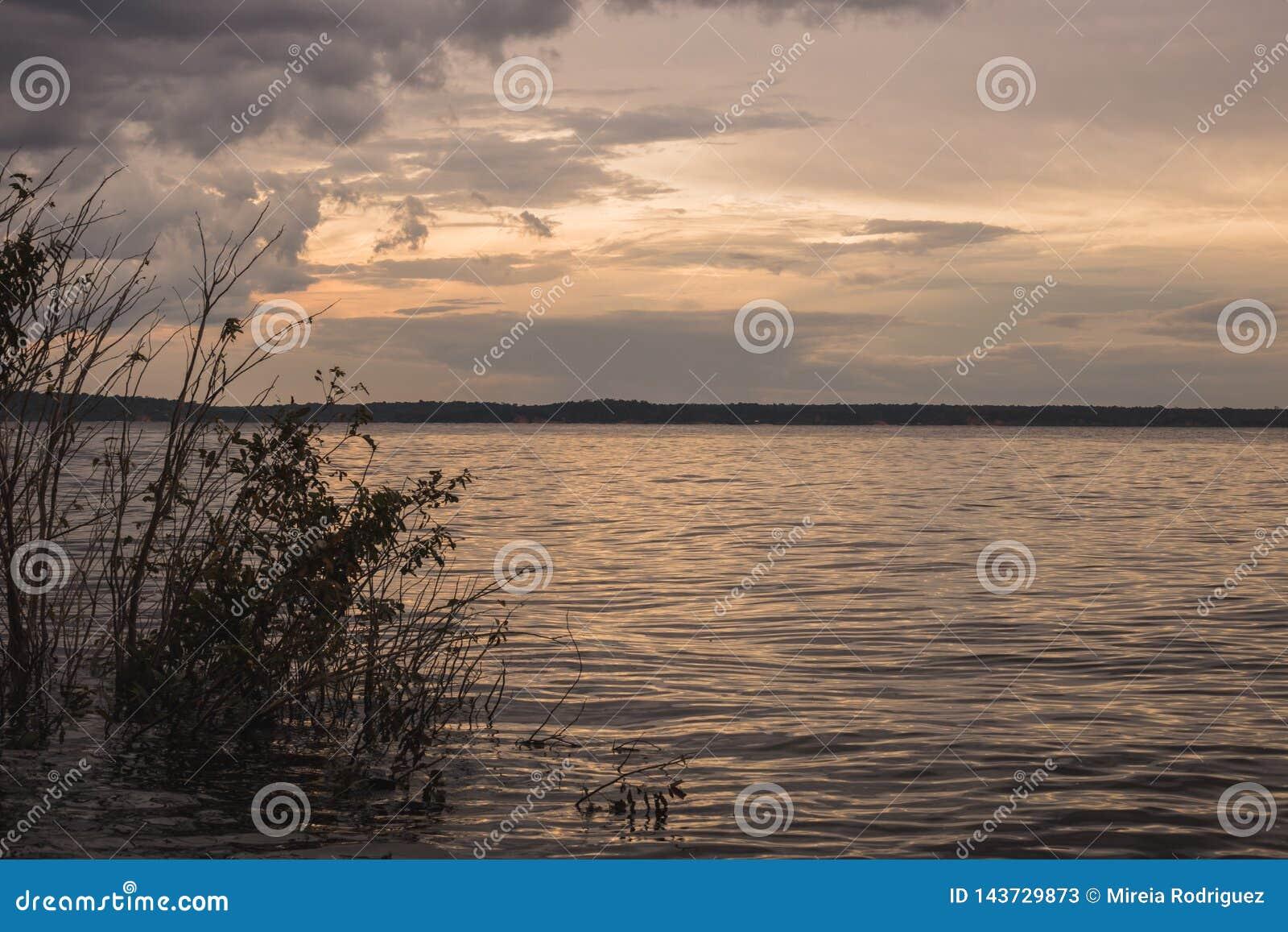 Sikt av den svarta floden i amasonen, Brasilien
