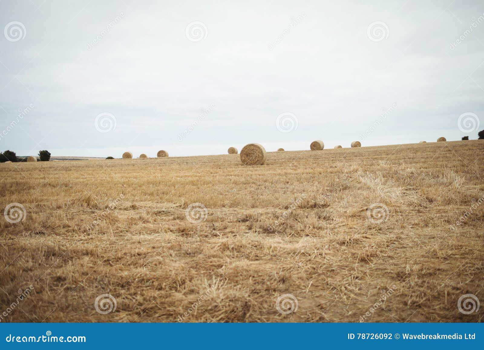Sikt av det skördade fältet