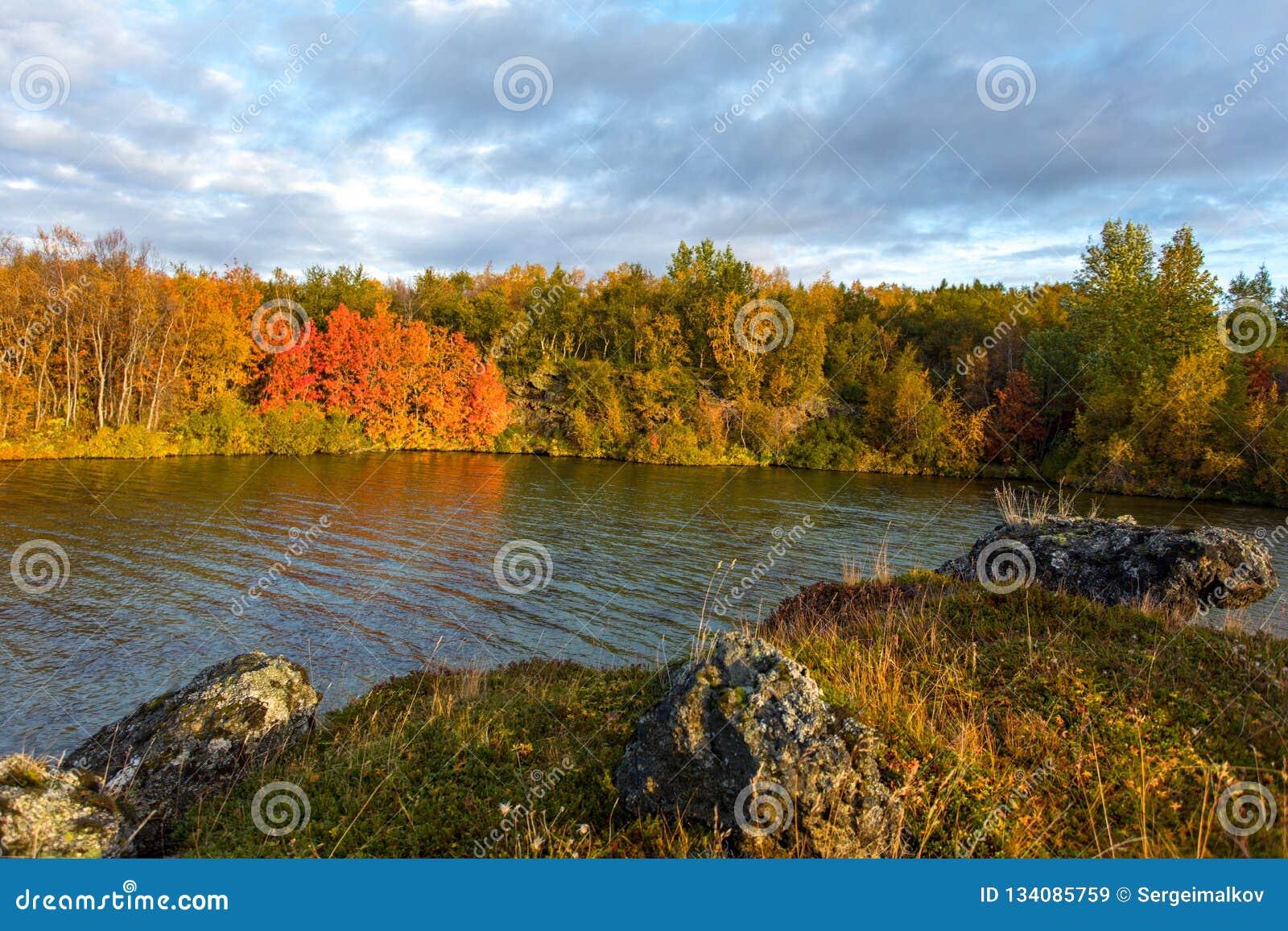 Sikt av höstskogen och yttersidan av sjön Härligt höstlandskap med vatten och ljus vegetation iceland Europ