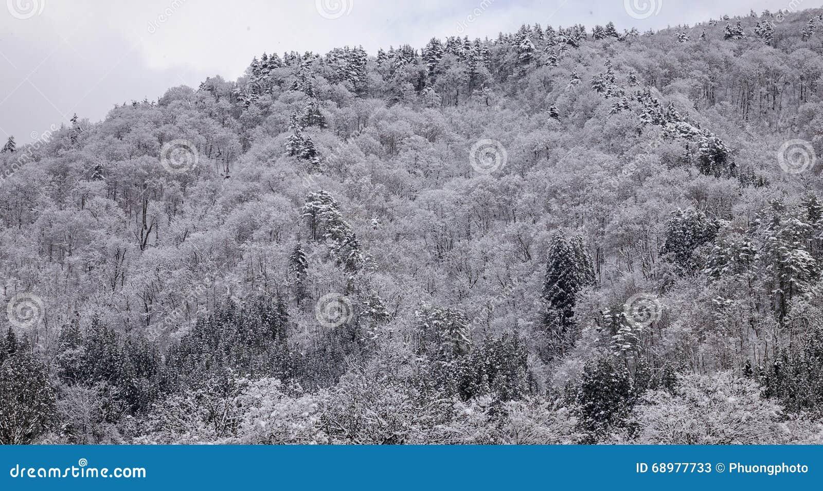 Sikt av skogen i vinter