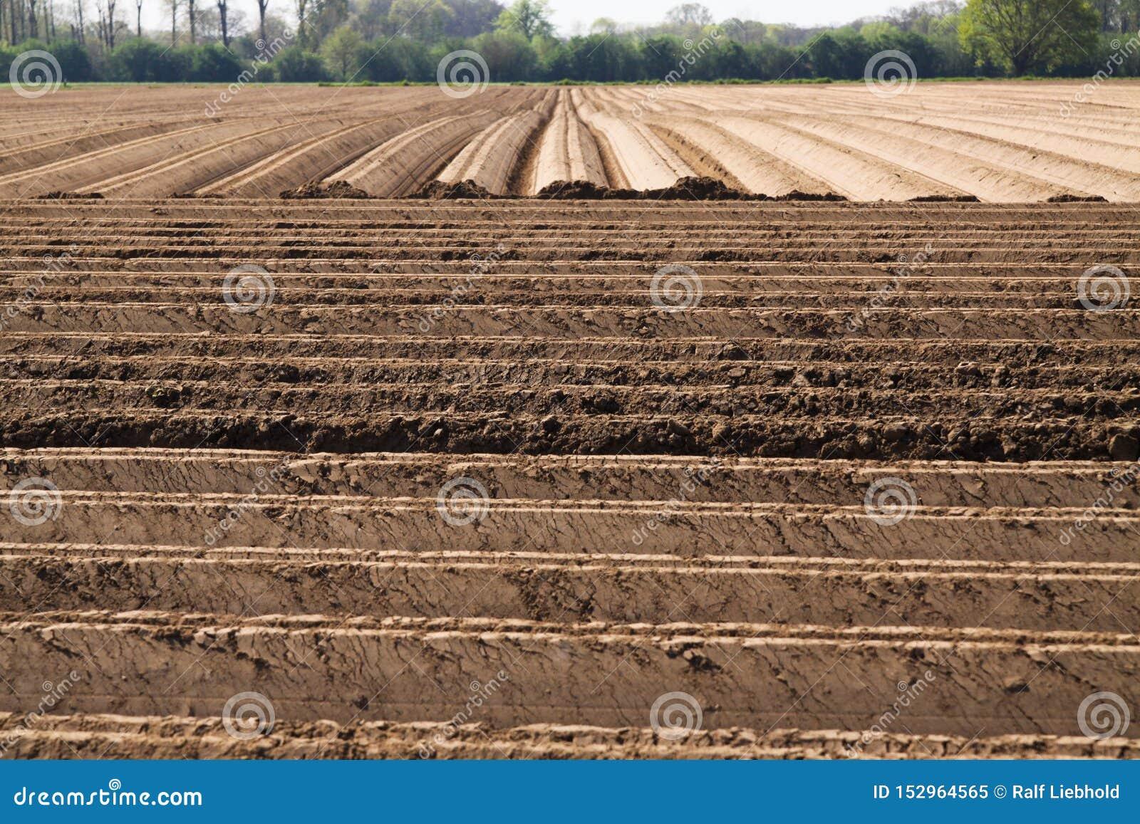 Sikt på plogad brukad cropland med symmetriska vertikala och horisontalfåror i Nederländerna nära Roermond