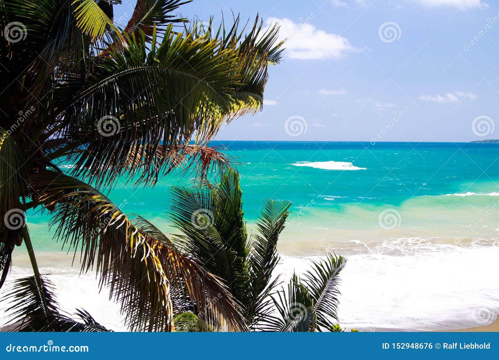 Sikt på turkoskustlinjen nära den blåa lagun med vågsäkerhetsbrytare och vitt skum utöver palmträd, Portland, Jamaica