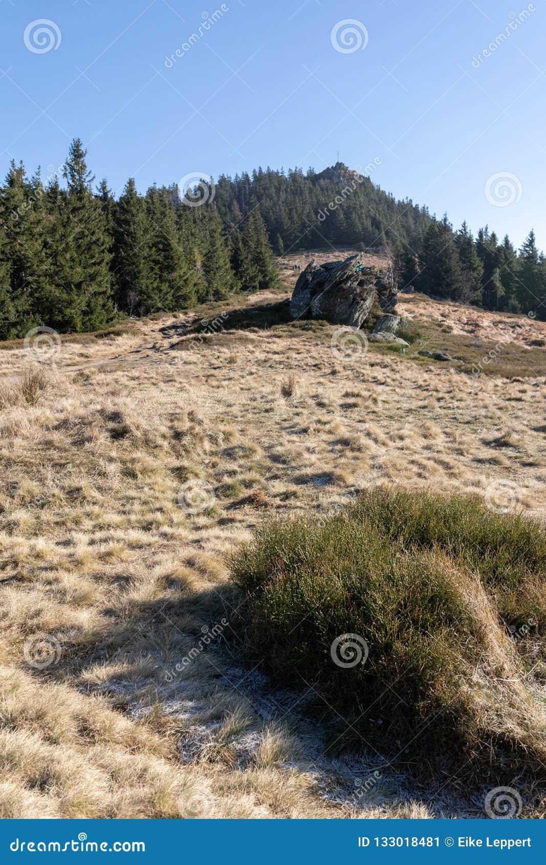 Sikt till överkanten av matriskleiner Osser i den bavarian skogen i Tyskland