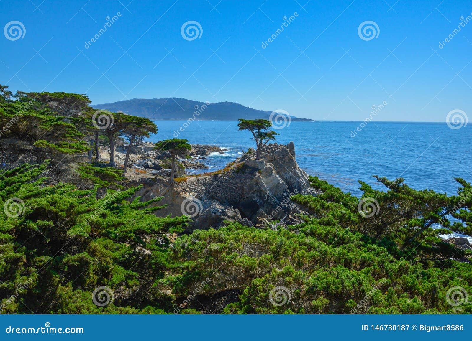 Sikten av cypresskullar fr?n den 17 mil v?gen i den Kalifornien kusten