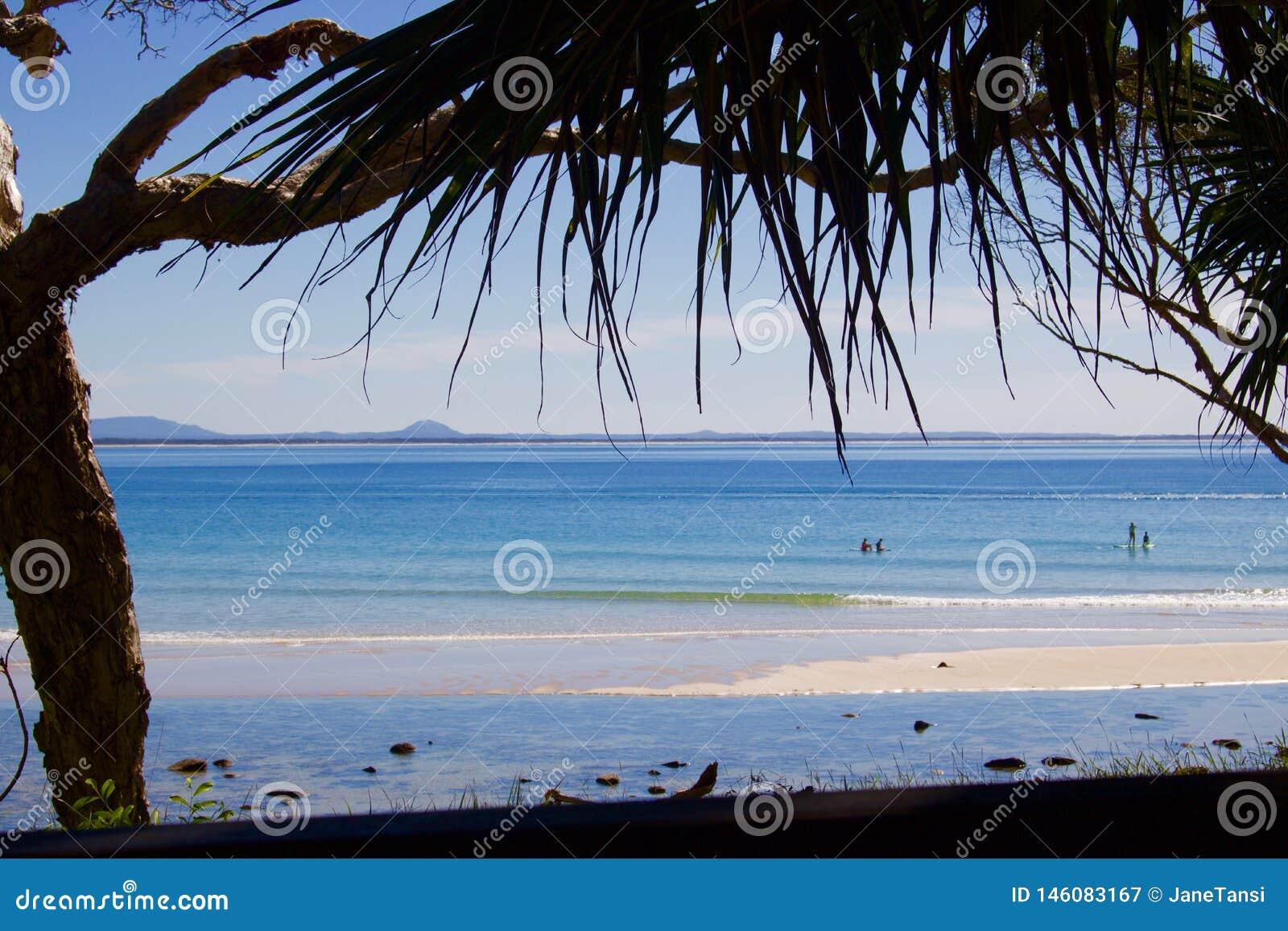Sikten av stranden på Noosa med att hänga över gömma i handflatan ormbunksblad