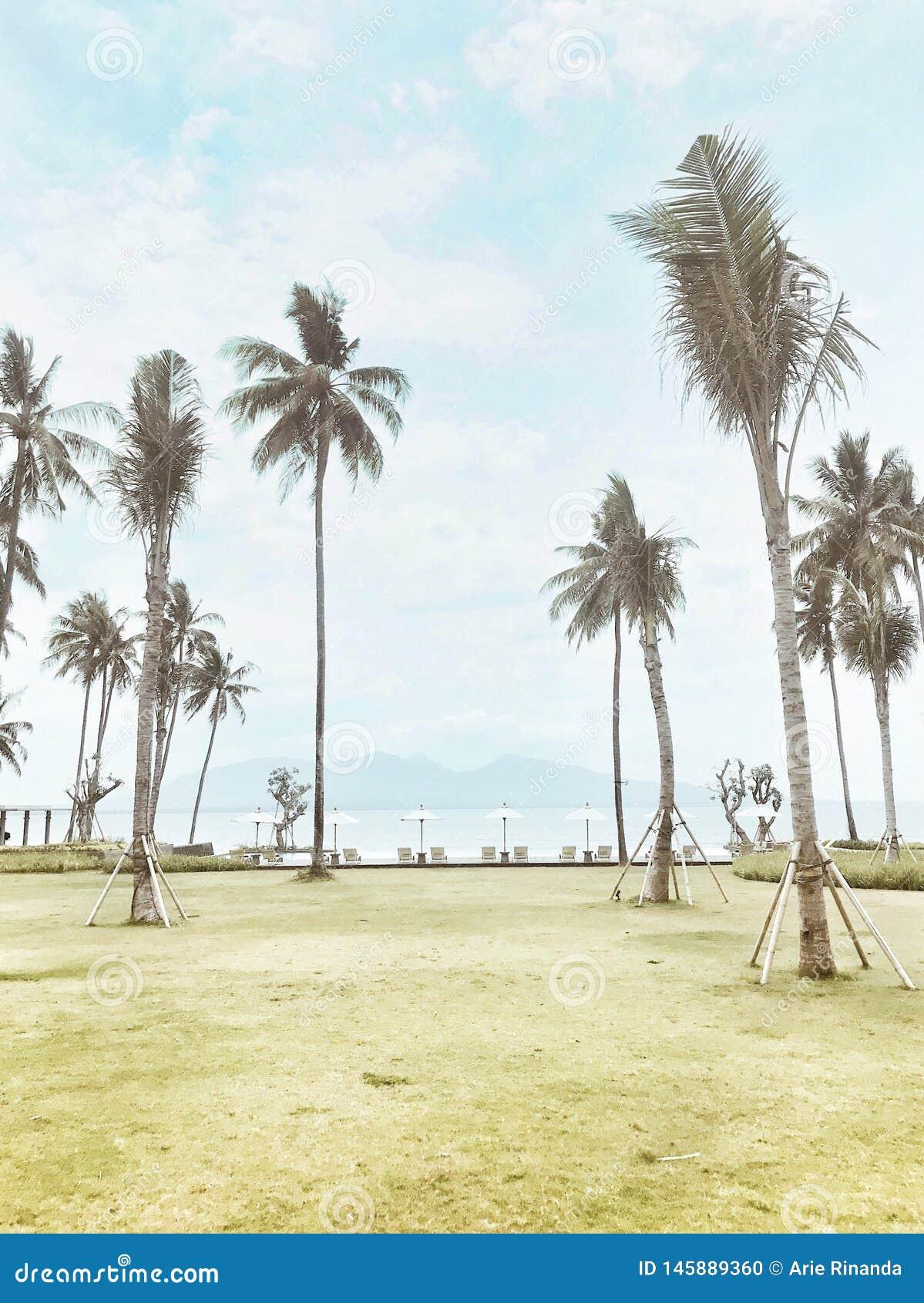 Sikten för havet för stranden för sommarsäsongen med klar blushimmel gömma i handflatan och trädkokosnöten