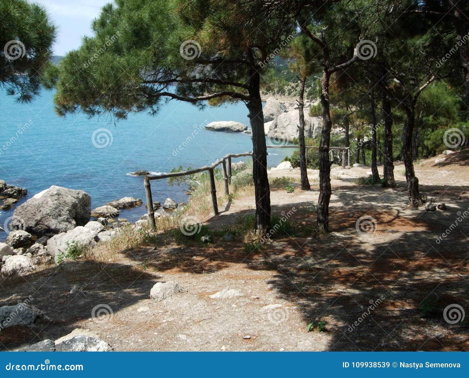 Sikten från kullen med träledstänger och sörjer trädet på kustlinjen Black Sea crimea