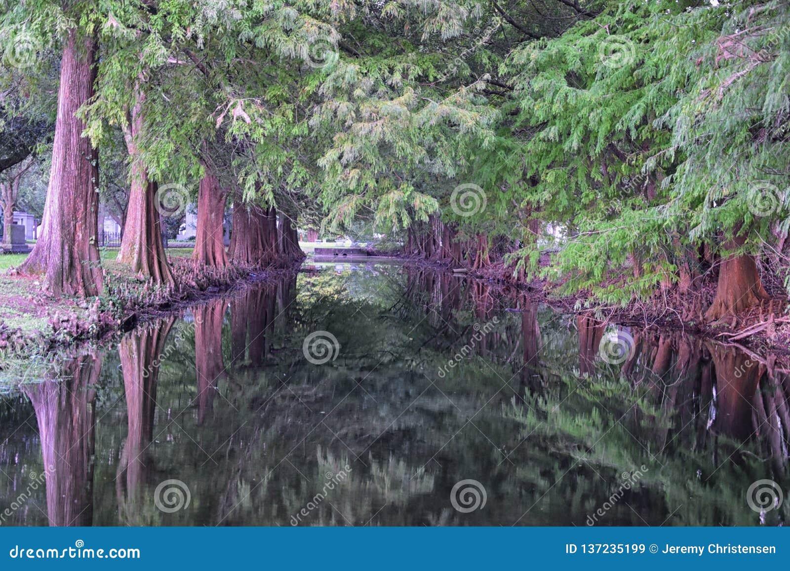 Sikter av träd och unika naturaspekter som omger New Orleans, inklusive reflekterande tips i kyrkogårdar och trädgårdområdet