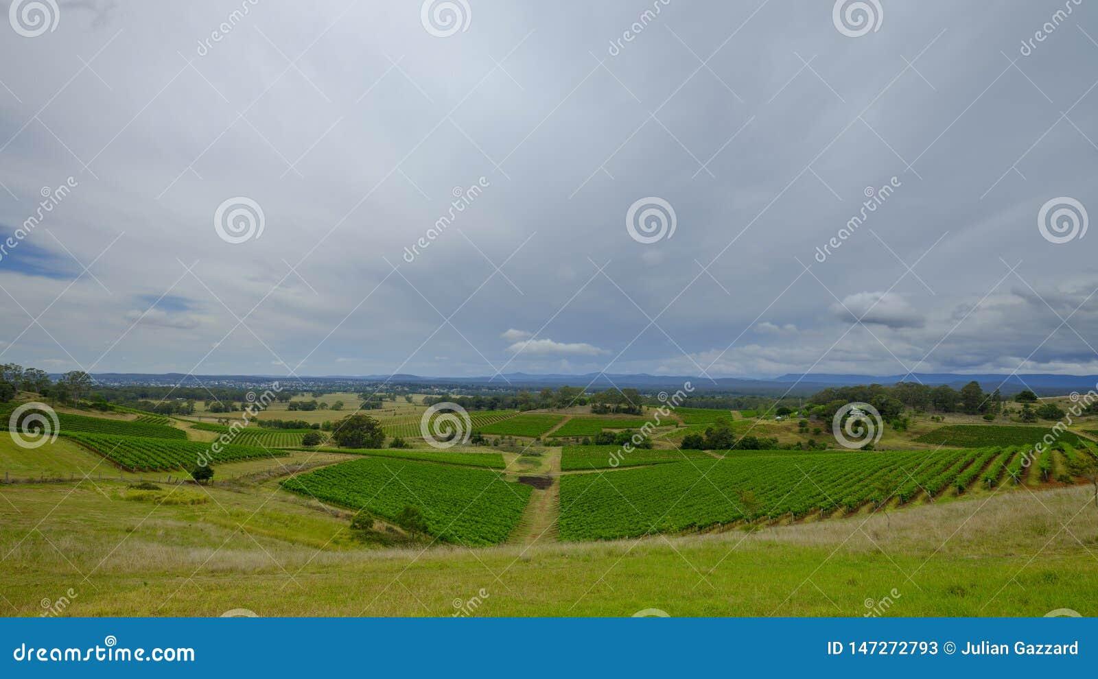 Sikter runt om Millfield och Cessnock i Hunter Valley, NSW, Australien