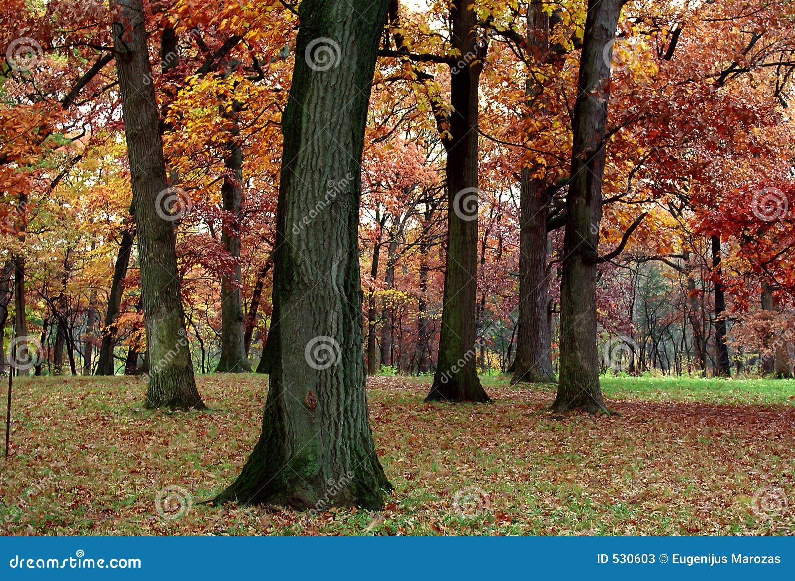 Silêncio do outono