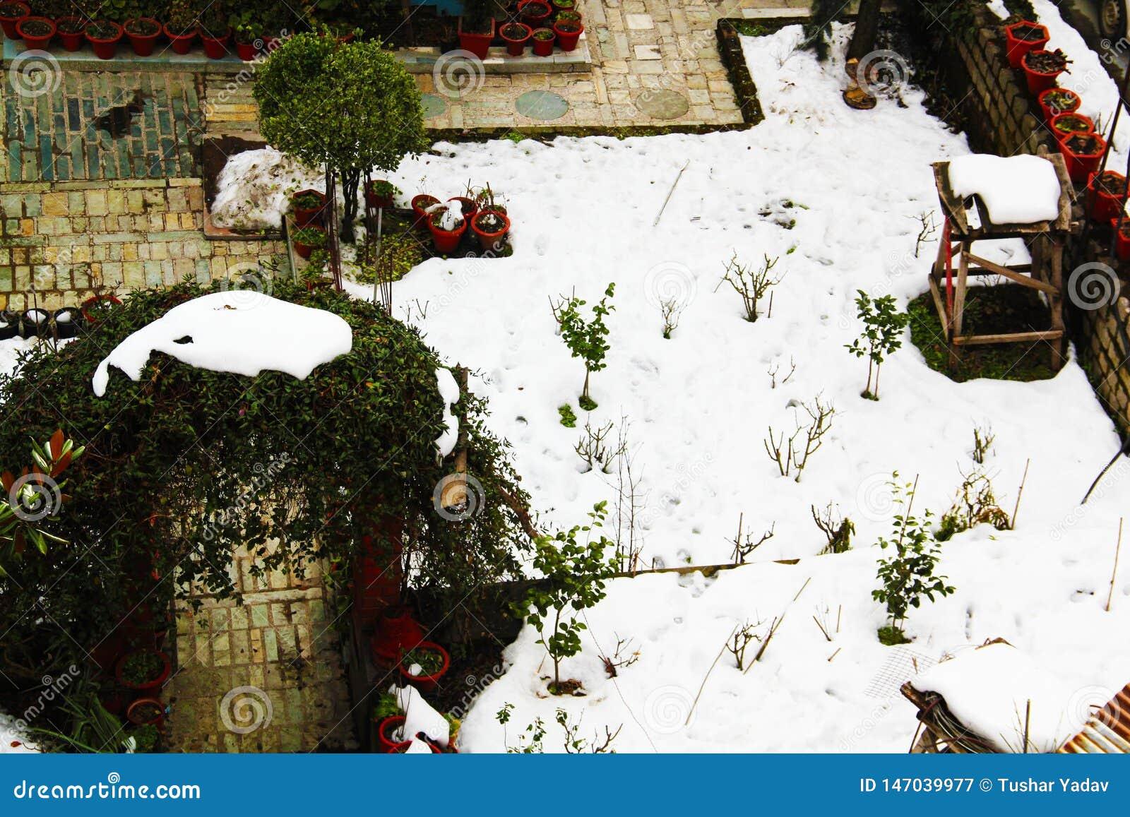 Silent winter landscape in the home garden full of white snow