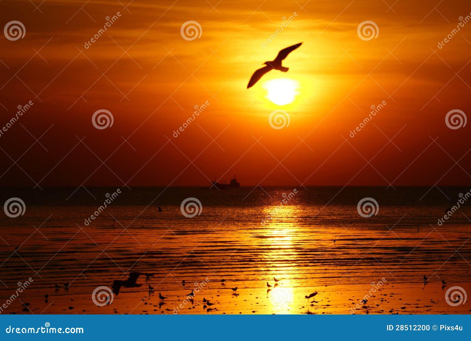 Silhouet dat van zeemeeuw over de oceaan bij zonsondergang vliegt