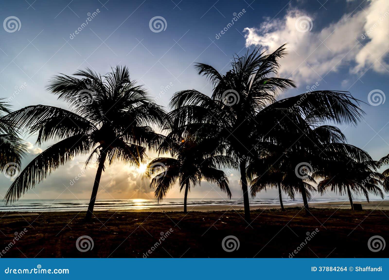 Silhouet van boom wanneer zon het toenemen