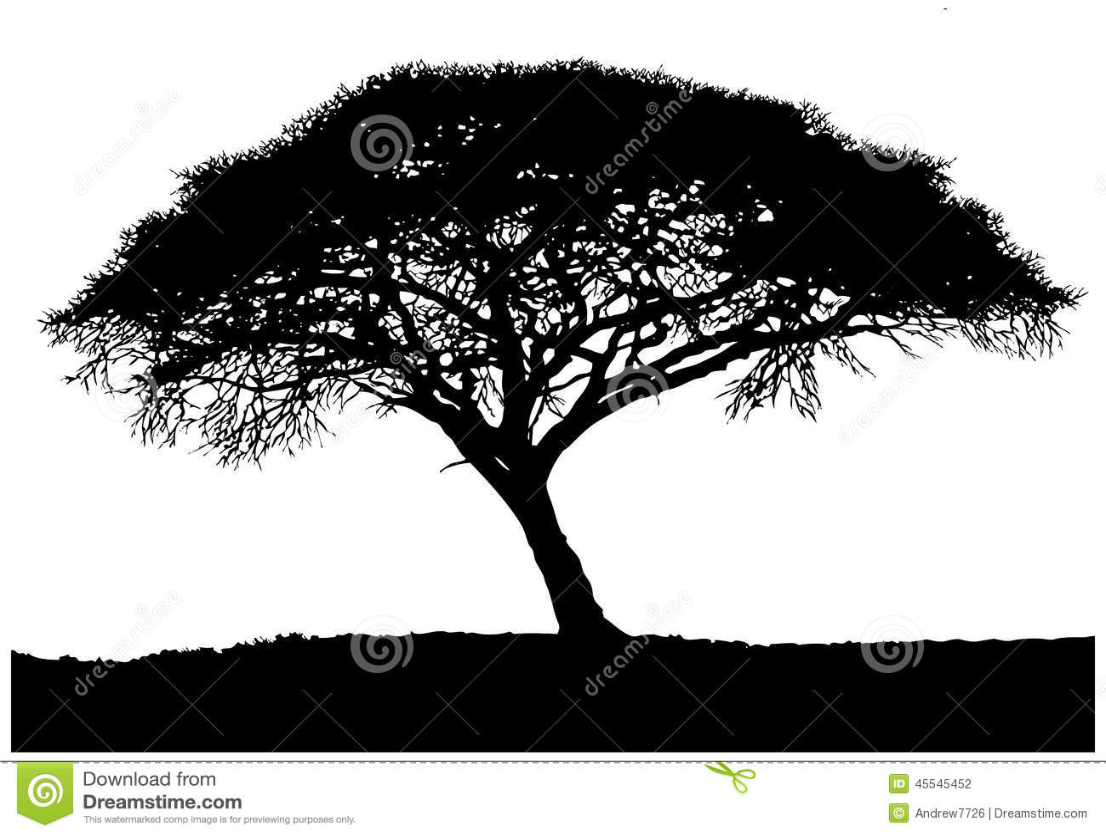 afrikaanse boom