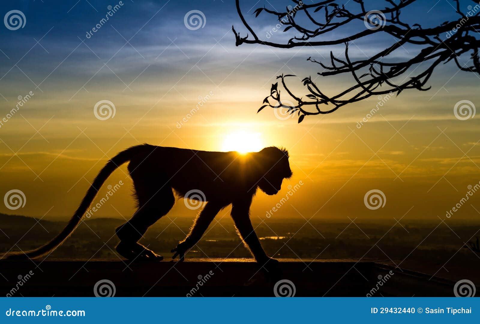 Silhouet van een aap