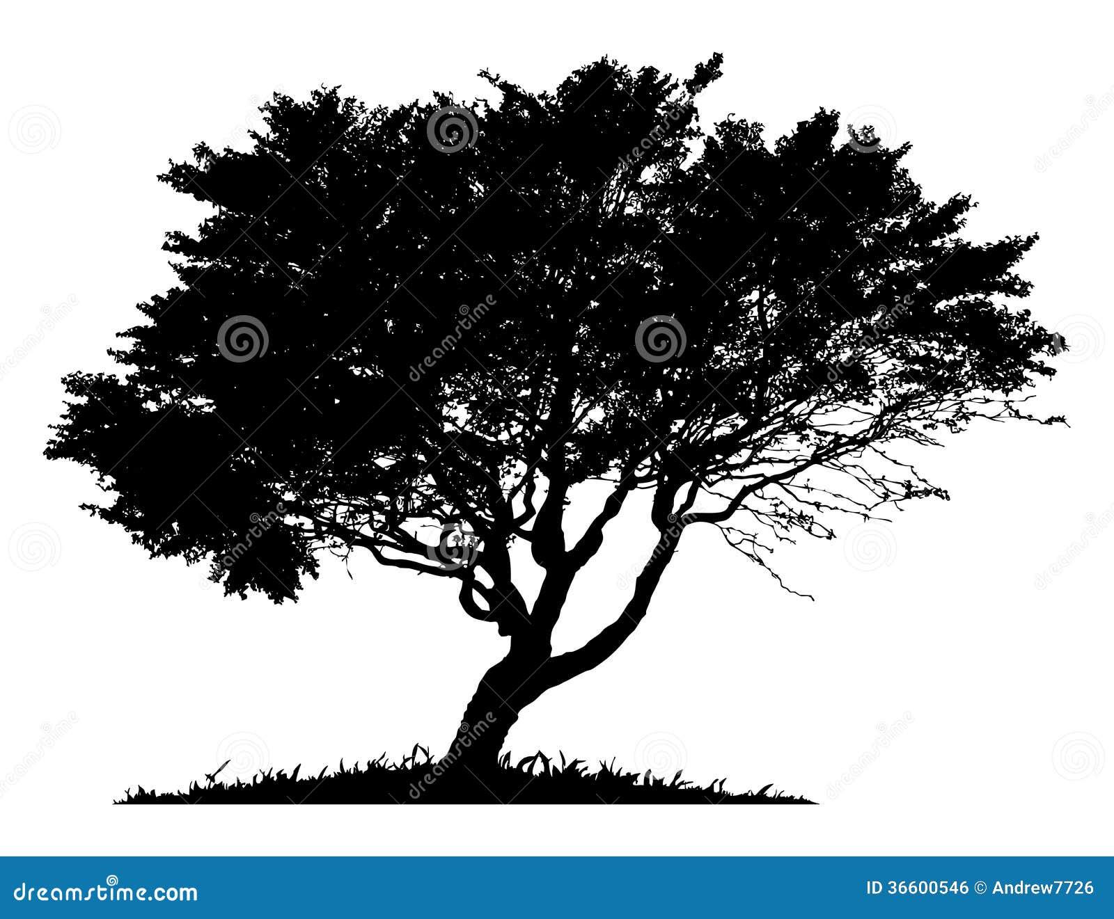 Silhouet van een eenzame boom