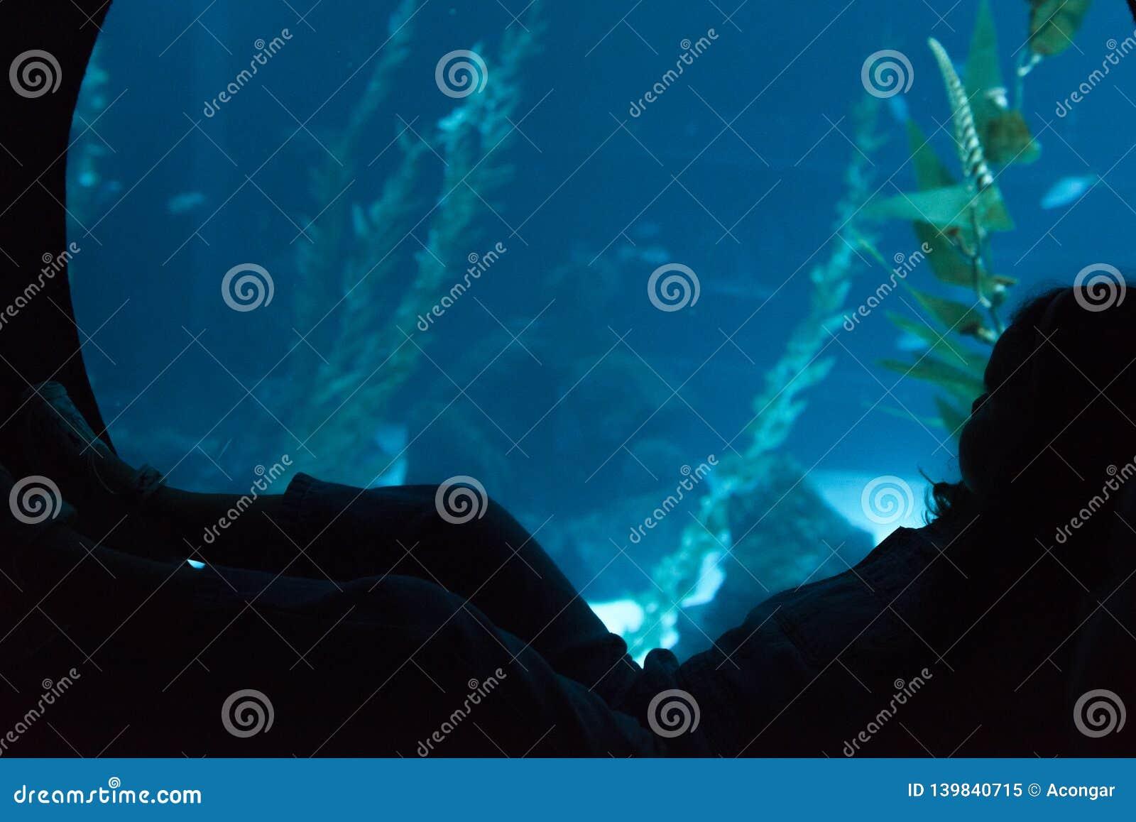 Silhouet van een klein kind die door het glas in het aquarium kijken