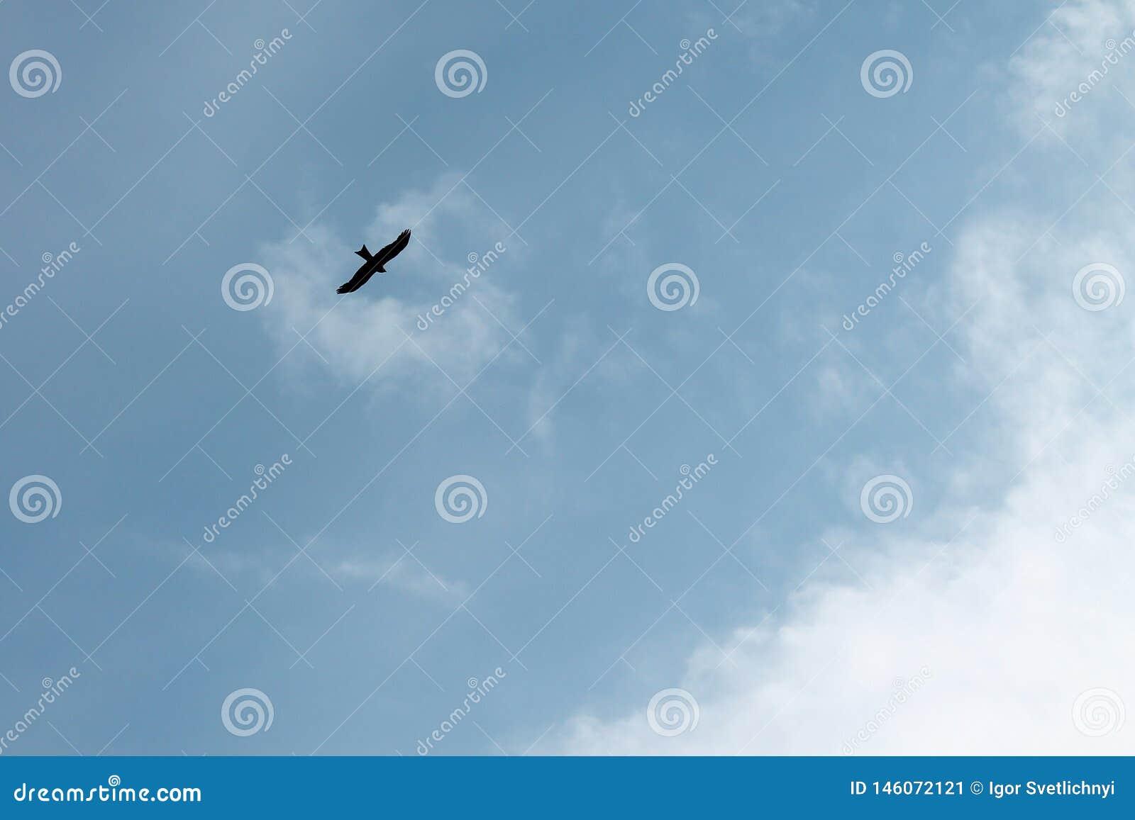 Silhouet van een vliegende adelaar