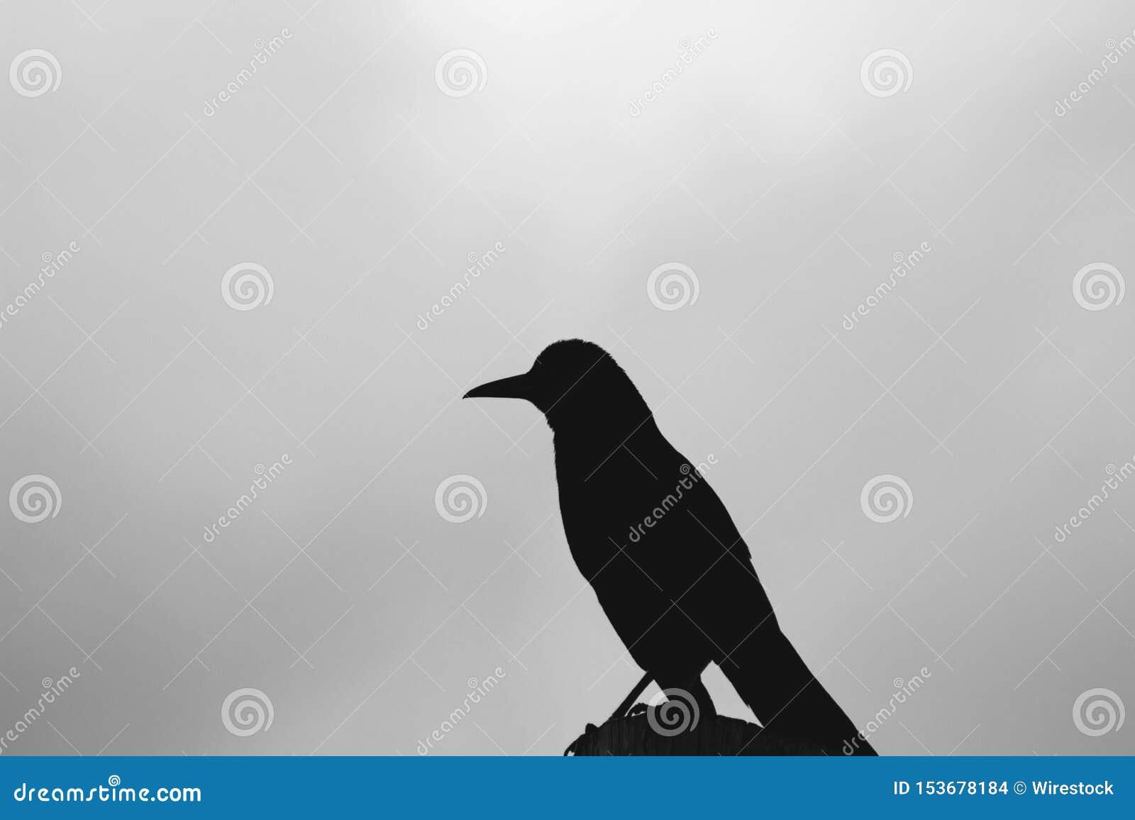 Silhouet van een vogel met een vage natuurlijke hemelachtergrond