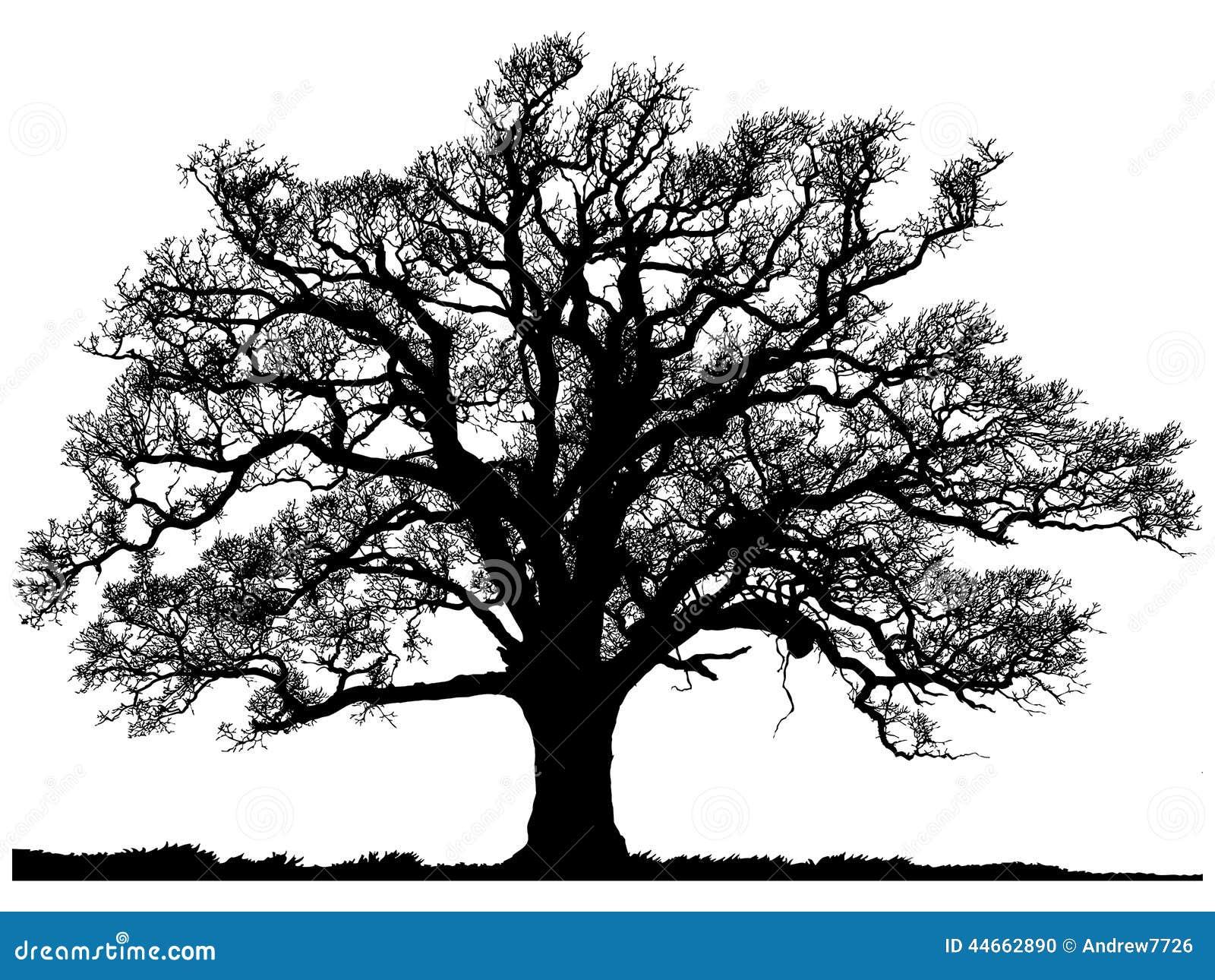 Silhouet van eiken boom