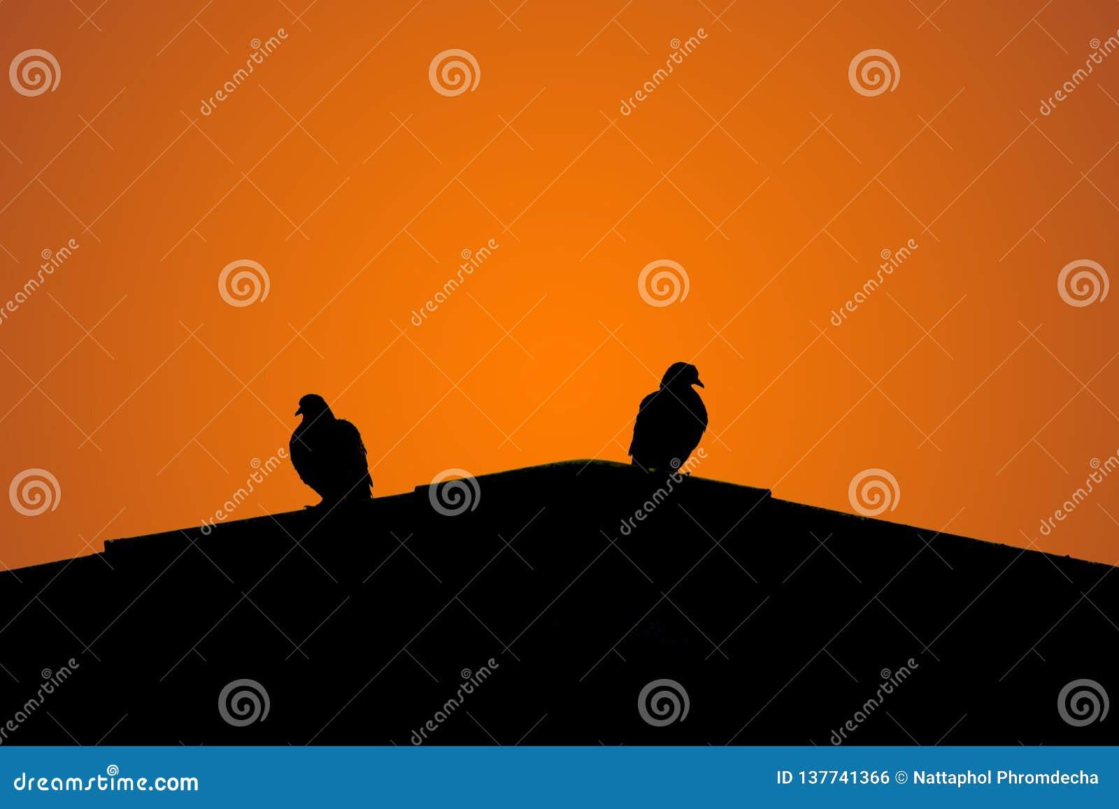 Silhouet van twee duiven bovenop het dak