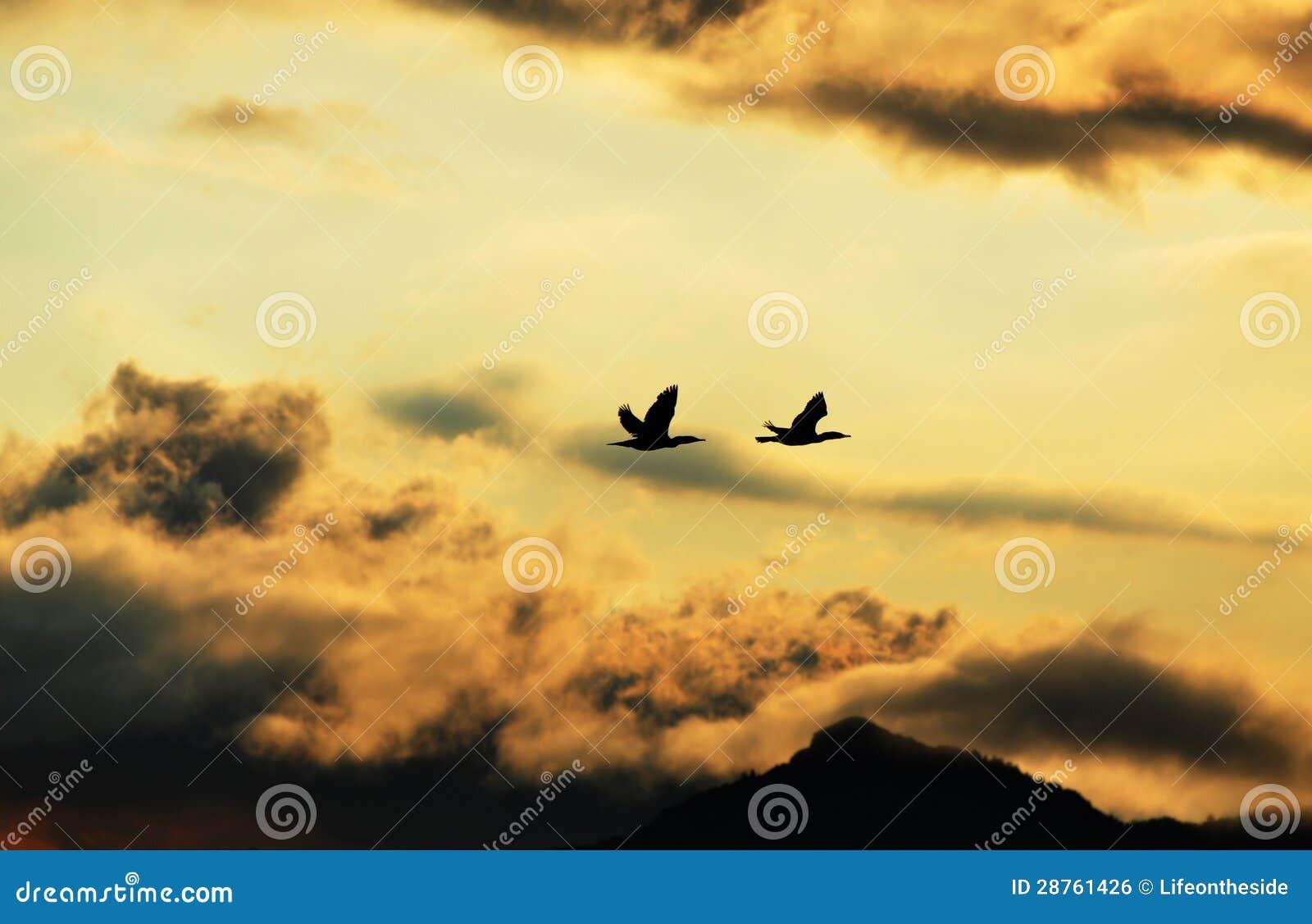 Silhouet van vogels die huis in donkere onweerswolken vliegen